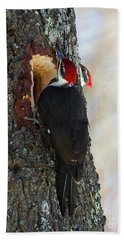 Pileated Whos There Beach Towel