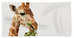 Portrait Of A Rothschild Giraffe  Beach Sheet