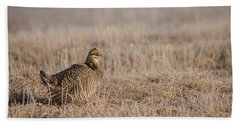 Beach Towel featuring the photograph Prairie Chicken 8-2015 by Thomas Young
