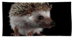 Prickly Hedgehog Isolated On Black Background Beach Sheet by Sergey Taran