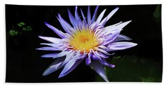 Purple Water Lily Beach Towel