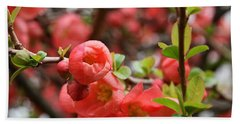 Quince Blossoms Beach Towel