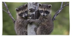Beach Towel featuring the photograph Raccoon Two Babies Climbing Tree North by Tim Fitzharris