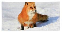 Red Fox Beach Towel by Steve McKinzie