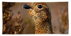 Red Grouse  Beach Towel