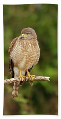 Roadside Hawk Beach Towel
