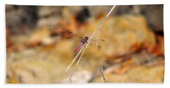 Beach Sheet featuring the photograph Fuchsia Fly by Al Powell Photography USA