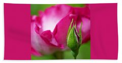 Beach Sheet featuring the photograph Budding Rose by Rona Black