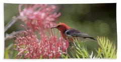 Scarlet Honeyeater Beach Sheet