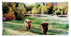 Scottish Highland Cattle - New Hampshire Fall Foliage Beach Towel