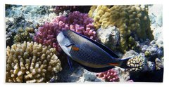Sohal Surgeonfish Beach Sheet