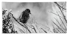 Snarky Sparrow, Black And White Beach Sheet
