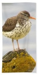 Spotted Sandpiper Beach Sheet
