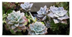 Beach Towel featuring the photograph Succulents by Catherine Lau