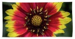 Beach Towel featuring the photograph Sunflower by Ed Clark