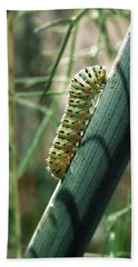 Swallowtail Caterpillar Beach Towel
