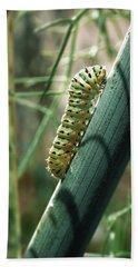 Swallowtail Caterpillar Beach Sheet