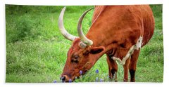 Texas Longhorn Grazing Beach Towel