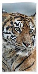 The Gaze Of A Tiger Beach Sheet by Jim Fitzpatrick