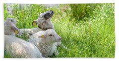 Beach Towel featuring the photograph Three Little Lambs by Patricia Hofmeester