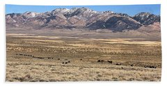 Trailing Cattle Beach Towel