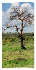 Beach Towel featuring the photograph Tree by Charuhas Images
