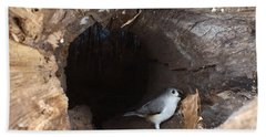 Tufted Titmouse In A Log Beach Sheet by Ted Kinsman
