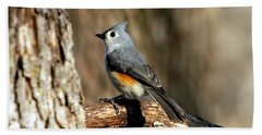 Tufted Titmouse On Branch Beach Sheet by Sheila Brown