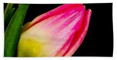 Tulip Beach Sheet