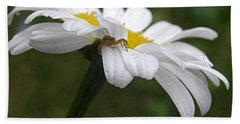 Beach Towel featuring the photograph Umbrella For A Spider by Angie Rea