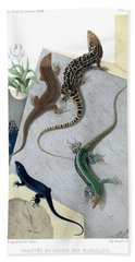 Beach Sheet featuring the drawing Varieties Of Wall Lizard by Jacques von Bedriaga