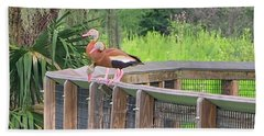 Whistling Ducks Beach Sheet