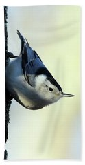 White Breasted Nuthatch Wading River New York Beach Towel by Bob Savage