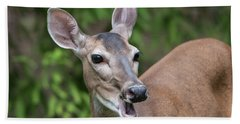 White Tailed Deer No. 2 Beach Towel