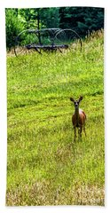 Beach Towel featuring the photograph Whitetail Deer And Hay Rake by Thomas R Fletcher