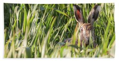Wild Hare In Crops Looking At Camera Beach Towel