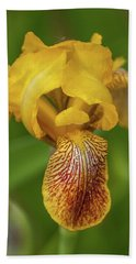 Beach Towel featuring the photograph Yellow Bearded Iris by Brenda Jacobs
