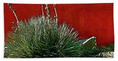 Yucca And Adobe Beach Sheet