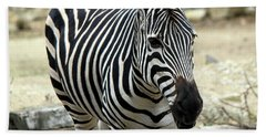 Zebra Beach Towel by Suhas Tavkar