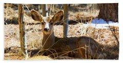 Mule Deer In The Pike National Forest Beach Towel
