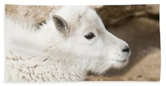 Baby Mountain Goats On Mount Evans Beach Towel