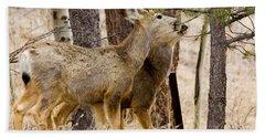 Mule Deer In The Pike National Forest Of Colorado Beach Towel