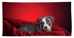 Beach Sheet featuring the photograph American Pitbull Puppy by Peter Lakomy