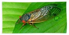 17 Year Periodical Cicada Beach Sheet
