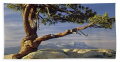 1m6701 Historic Jeffrey Pine Sentinel Dome Yosemite Beach Sheet