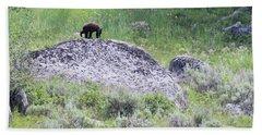 American Black Bear Yellowstone Usa Beach Towel
