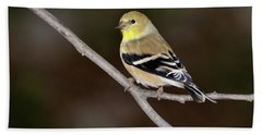 American Goldfinch Beach Towel by Betty LaRue