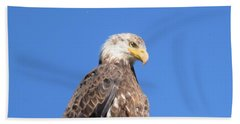 Bald Eagle Juvenile Perched Beach Towel