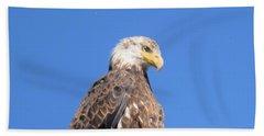 Bald Eagle Juvenile Perched Beach Towel