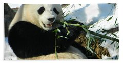 Bao Bao Sittin' In The Snow Taking A Bite Out Of Bamboo1 Beach Towel by Emmy Marie Vickers